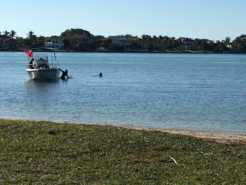 Snorkeler scooting off boat into Sarasota Bay at Quick Point