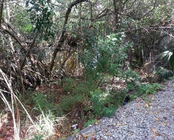 2020 Hudson Bayou Restoration Exotic Veg Removal