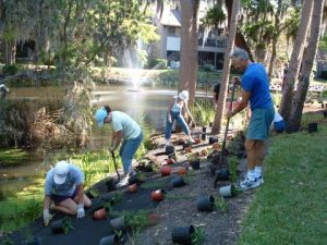 Bay Partners planting At Pelican Cove