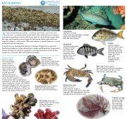 Field Guide Bay Habitats Oyster Beds