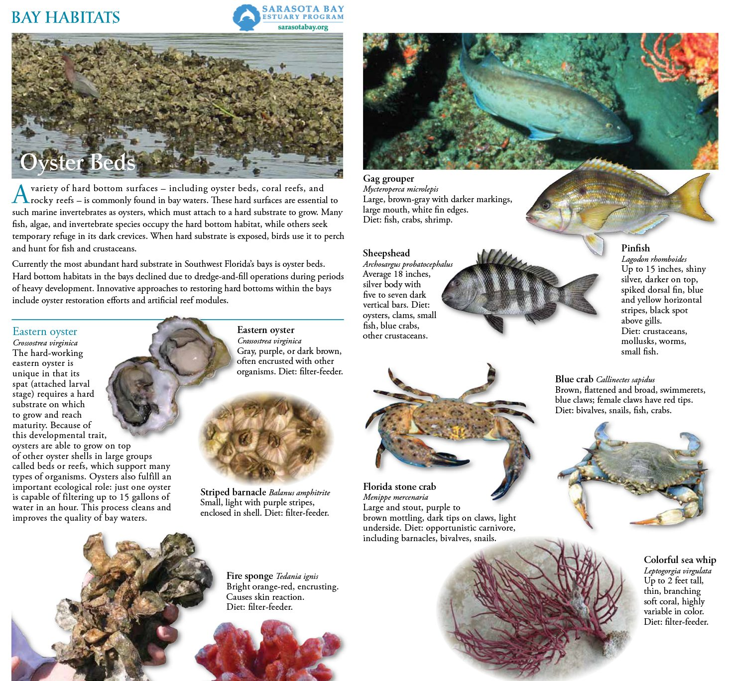 Field Guides: Sarasota Bay Estuary Program