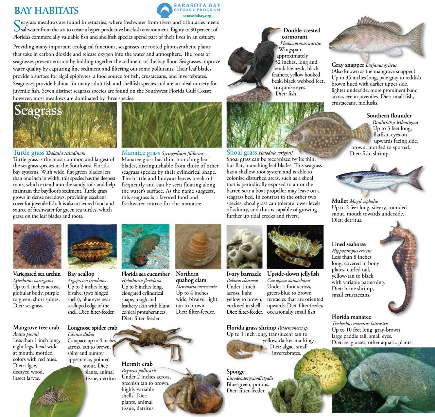 Field Guide – Sarasota Bay Estuary Program