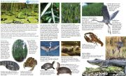 Field Guide Wetlands Habitats Freshwater