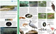 Field Guide Wetlands Habitats - Tidal