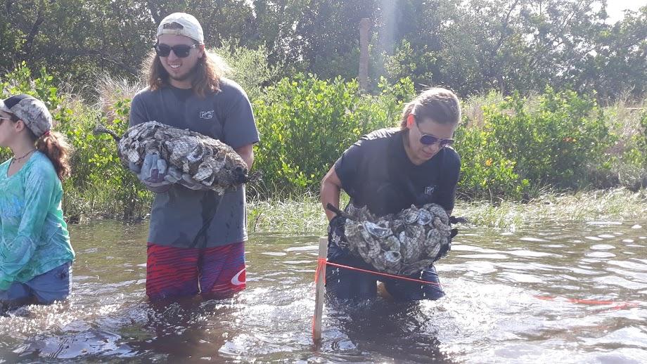 Volunteers in water building the reef at Perico Preserve