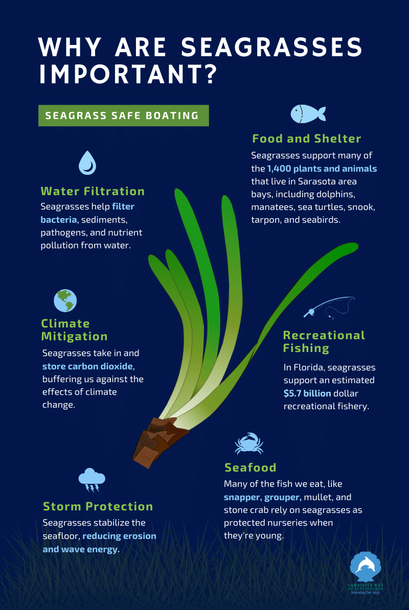 Why Are Seagrasses Important Infographic