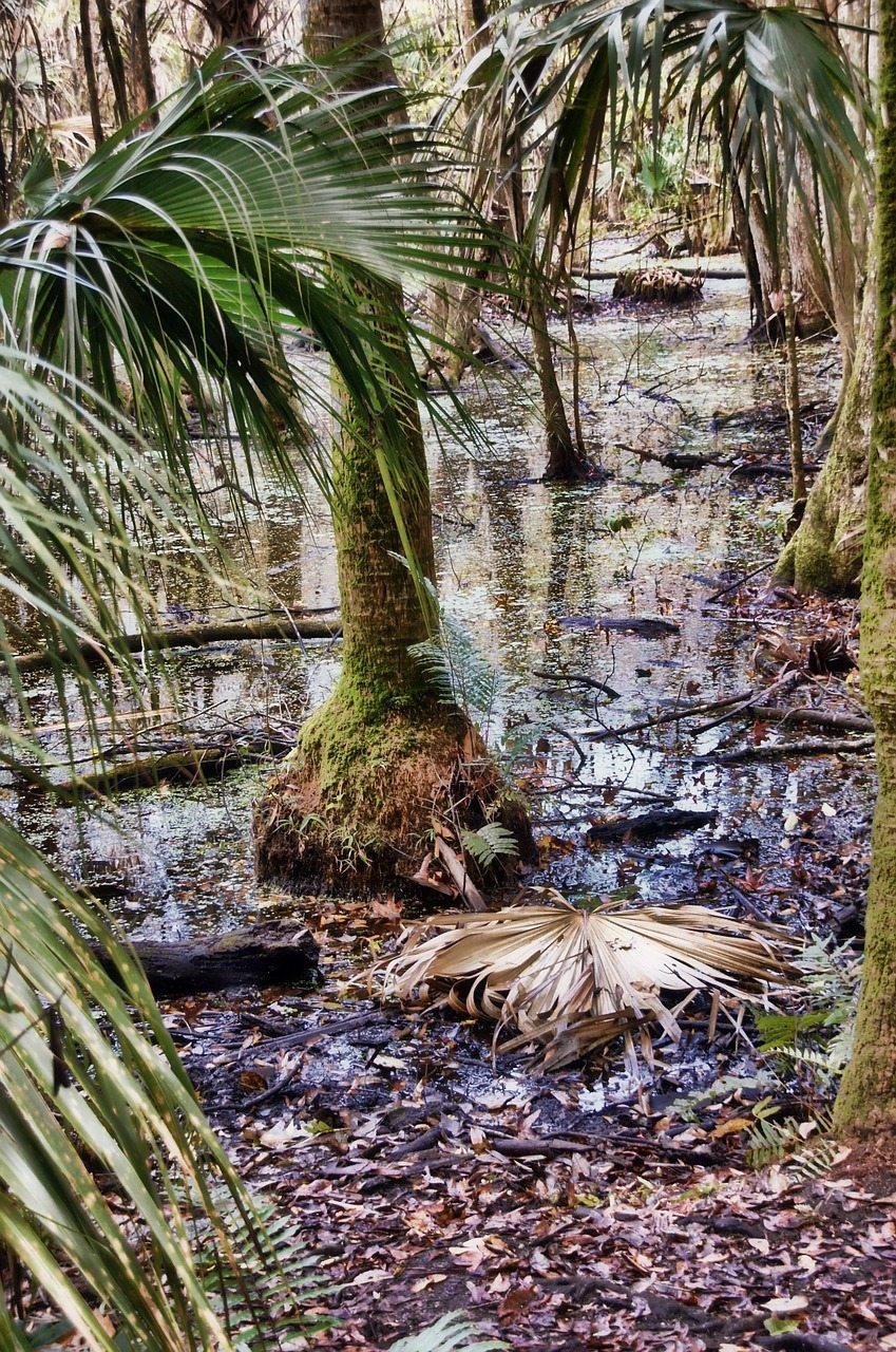 Florida Wetland